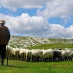 Сколько зарабатывает пастух