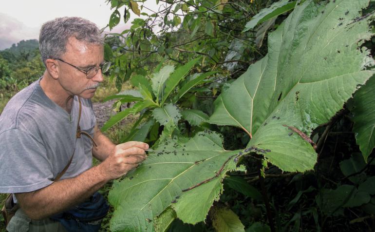 Агроном-энтомолог