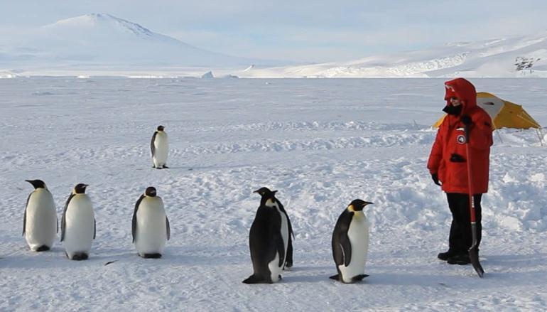 Сколько денег платят переворачивателям пингвинов