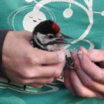 Сколько зарабатывают орнитологи