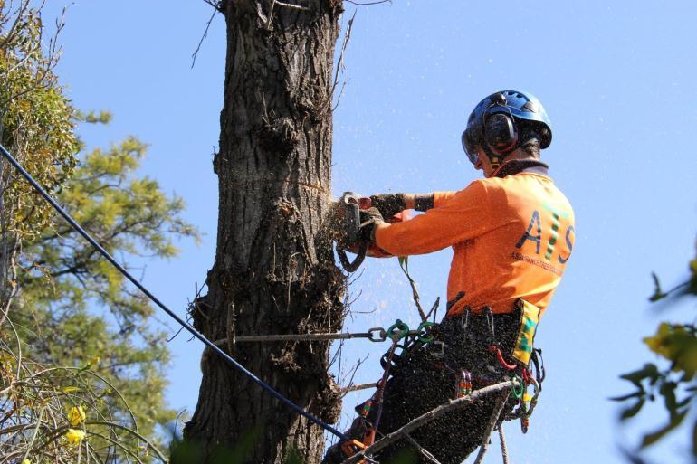 Устранение аварийных деревьев