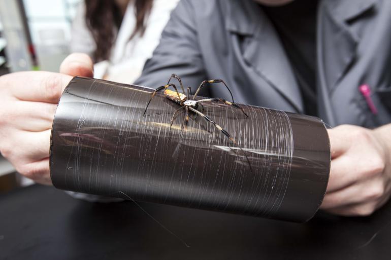 Извлечение паутины из пауков