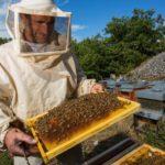 Сколько получают пчеловоды