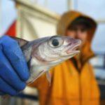 Сколько зарабатывает рыбак в Мурманске или Камчатке