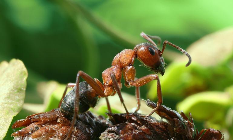 Стоимость создания колонии муравьев