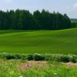 Стоимость аренды сотки земли